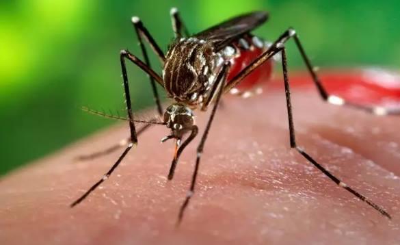 Kenali Bahaya Virus Zika Sedini Mungkin!