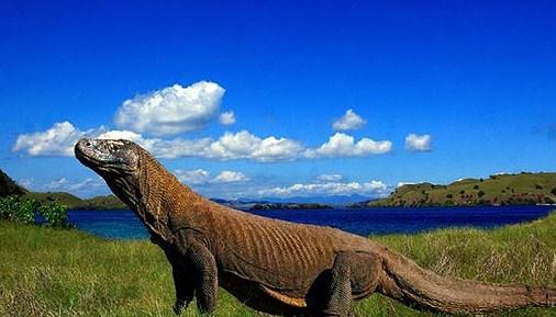 Ayo ke Pulau Komodo !