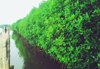 Hutan Mangrove Jogja